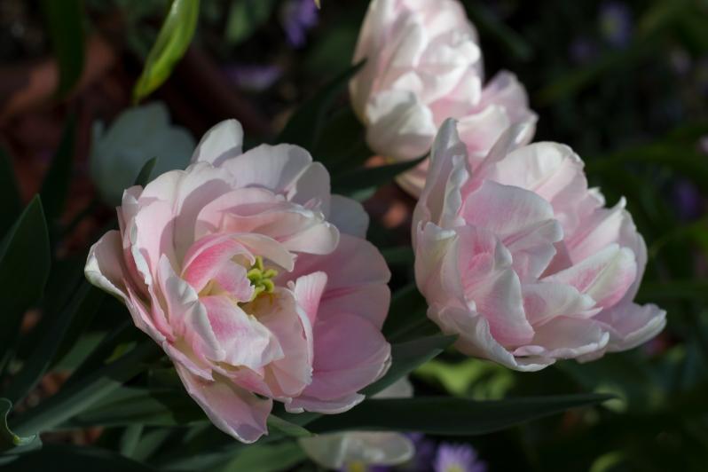 petit-flowers