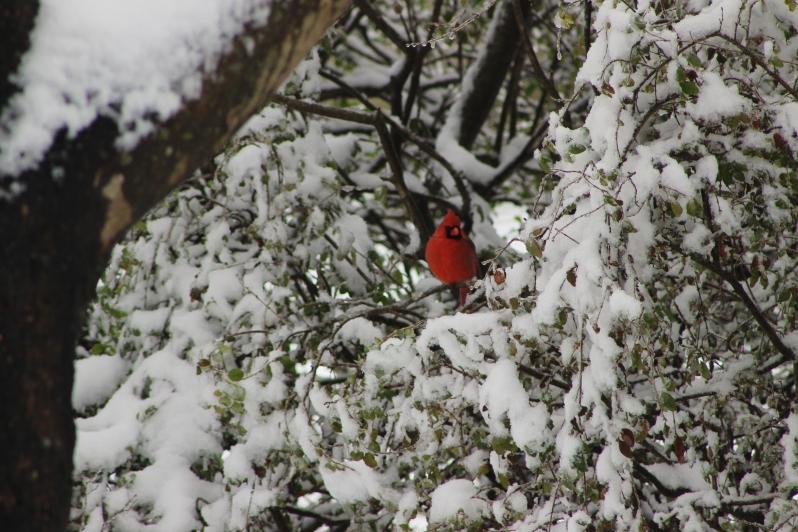 feather + fir — First Snow