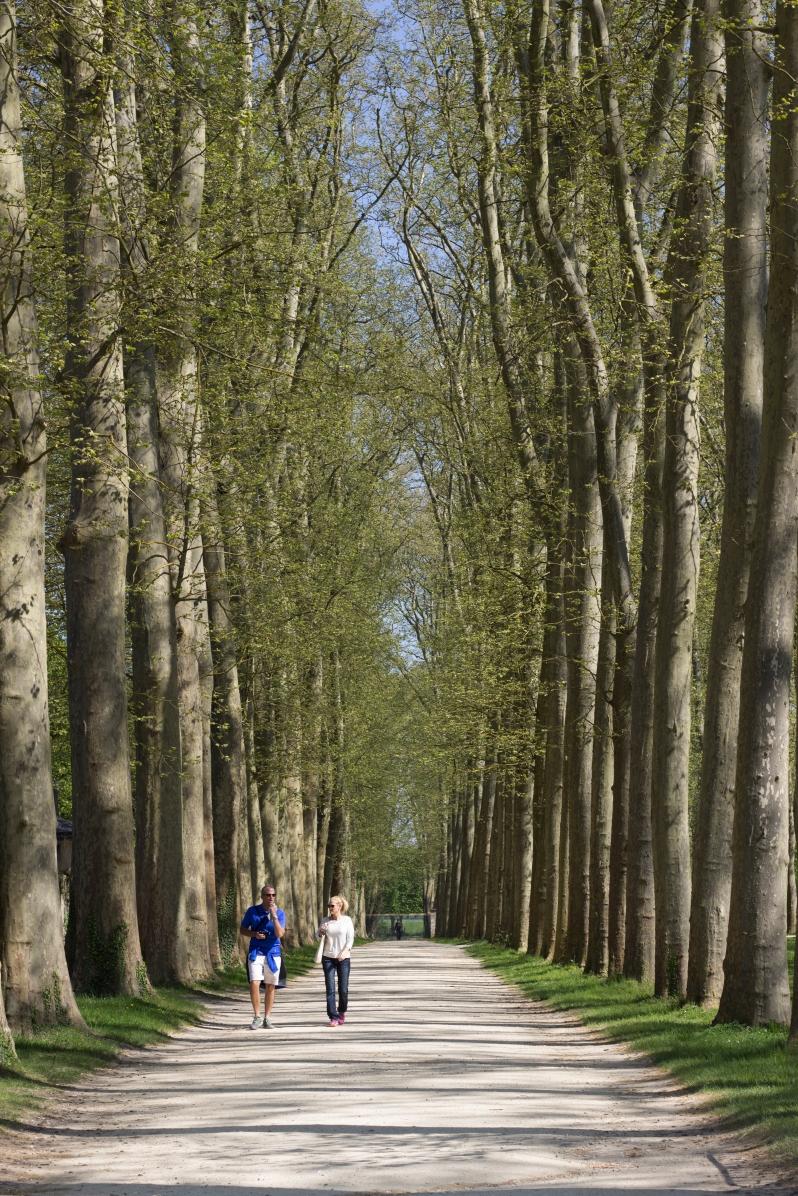 versailles-trees