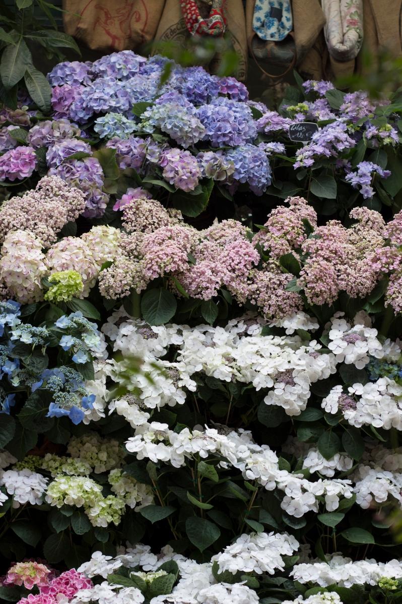 flower-shop3
