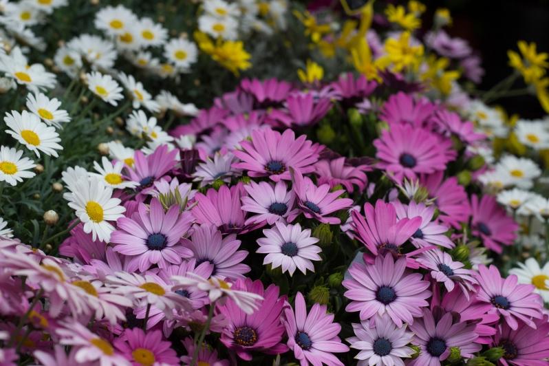 flower-shop5