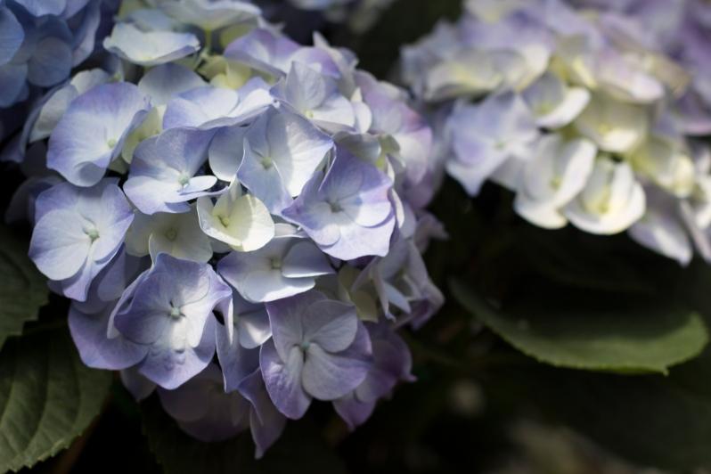 flower-shop9
