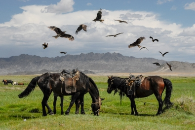 Horses and Black Kite